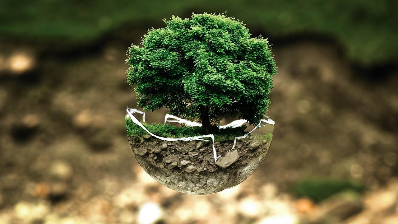 pollution et plantes carnivores